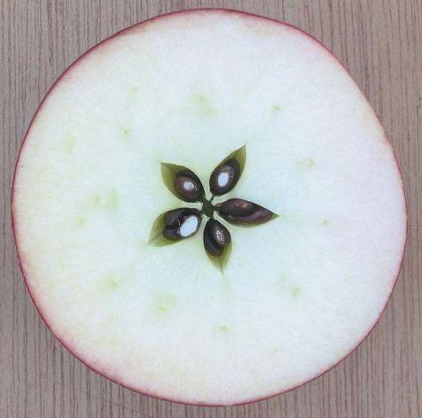 manzana-corte-transversal